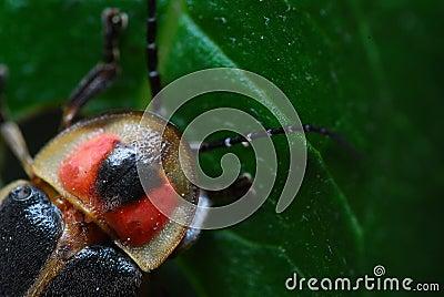 Hidden Firefly
