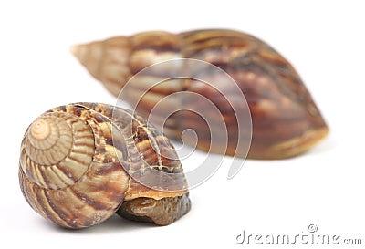 Hiding snails