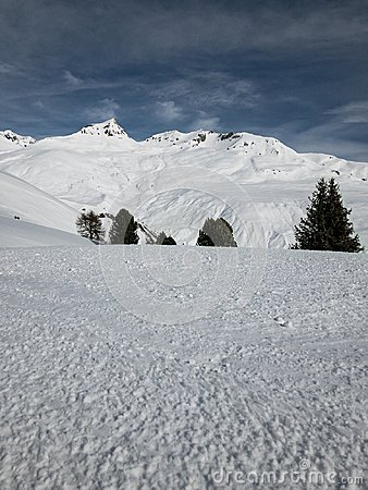 Free Hiding Trees On A Snowy Hill Royalty Free Stock Image - 111504806