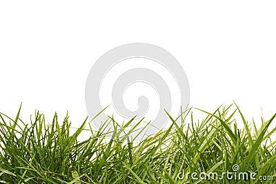 Hierba alta fotos de archivo imagen 4715993 - Cortar hierba alta ...