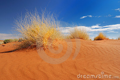 Hierba amarilla en el desierto