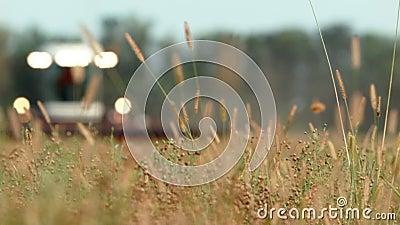 Hierba del campo en la cosechadora del fondo Cosecha almacen de metraje de vídeo