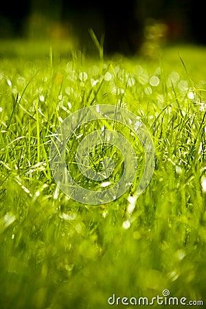 Hierba mojada verde