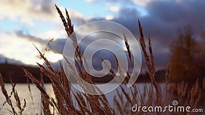 Hierba seca en medio de las nubes en la puesta del sol metrajes
