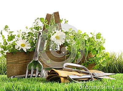 Hierbas frescas en rectángulo de madera en hierba