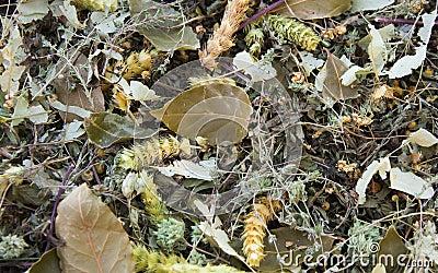 Hierbas y cocinar las hojas secas foto de archivo imagen for Plantas aromaticas para cocinar