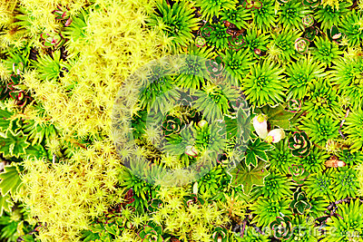 High Altitude Moss Stock Photo