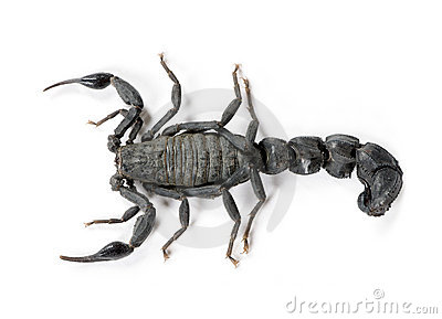 High angle view of Scorpion