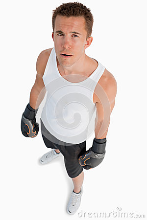 High angle view of standing boxer