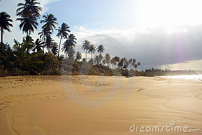 High contrast tropical beach scene