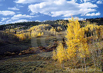 High Country Fall A