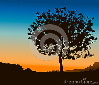 High Detail Tree Stock Images - Image: 26438524