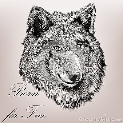 how to draw a detailed wolf