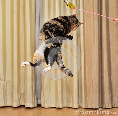 High jumping cat Stock Photo