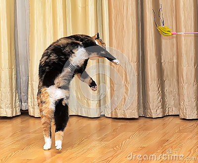 High jumping cat Stock Photo