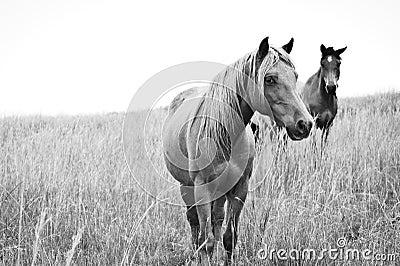 High Key Horses