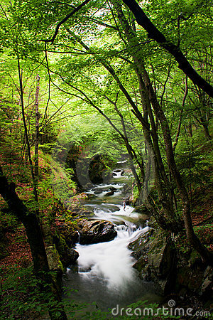 High mountain stream in forest