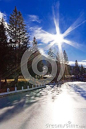 High pine trees on frozen lake under blue sky