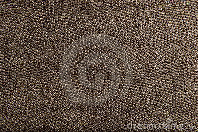 High Quality Animal Reptile Skin Patten and Textur