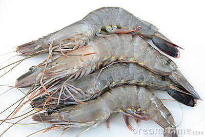 High quality fresh prawns