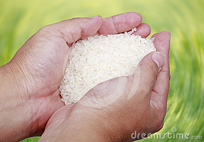 High quality rice