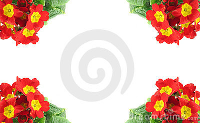 High resolution frame decorated with beautiful vivid flowers
