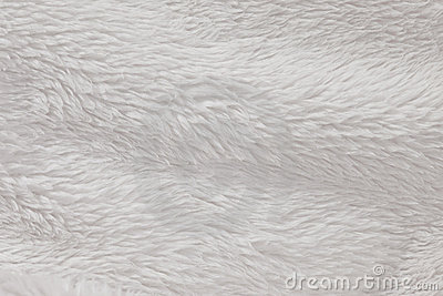 High Resolution fur furry white textured