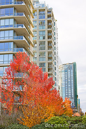 High rise skyline tower autumn
