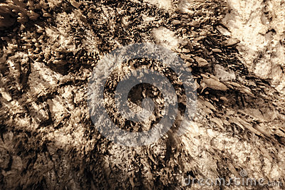High up the cave