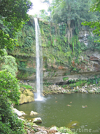 High watefall with the jungle