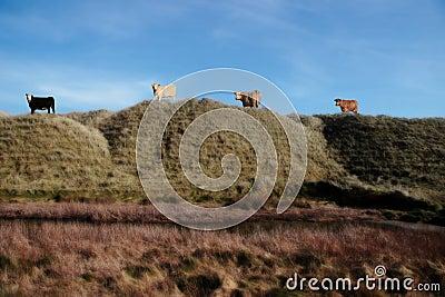Highest pasture