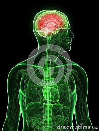 Highlighted brain
