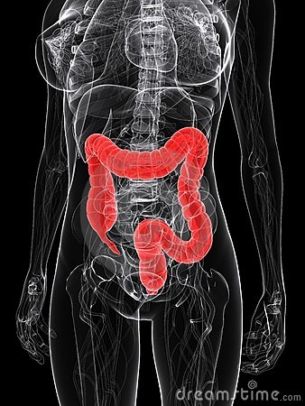Highlighted colon