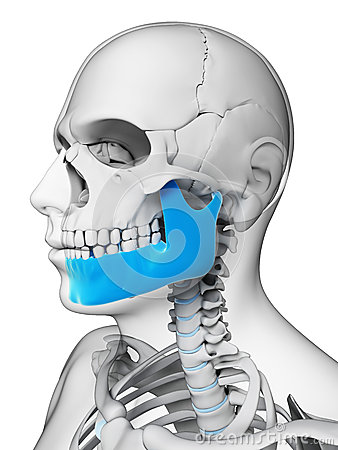 Free Highlighted Jaw Bone Stock Images - 30721754