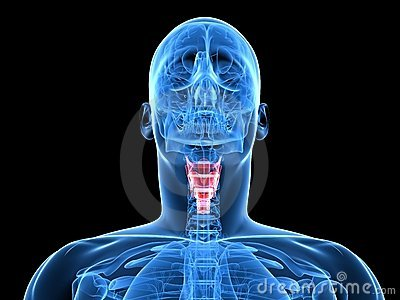 Highlighted larynx