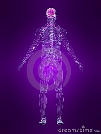 Free Highlighted Nervous System Stock Photo - 6534050