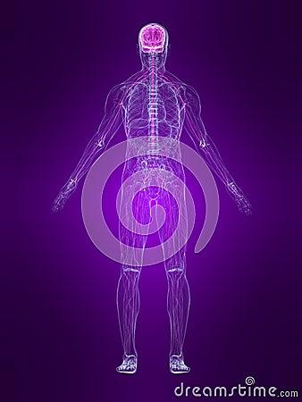 Highlighted nervous system
