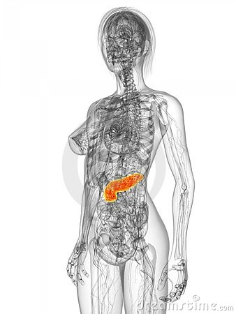 Highlighted pancreas