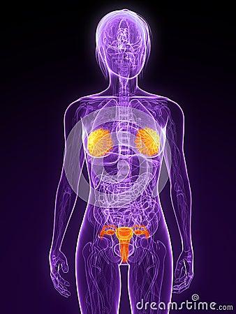 Highlighted sex organs