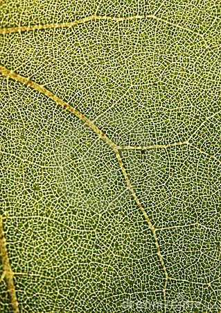 Highly detailed close up photo of a plant foliage