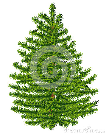 Highly detailed fir tree.