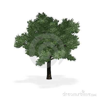 Highly detailed tree