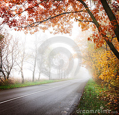 Highway in the autumn forest.