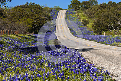 Highway Lined With Flowers