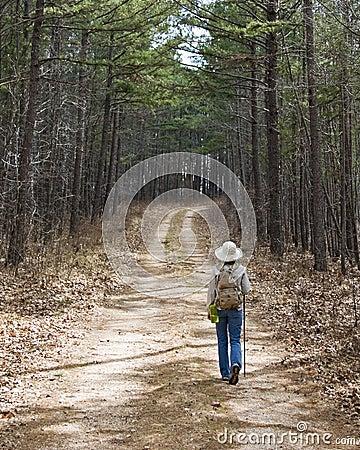 A hike through the pine trees.
