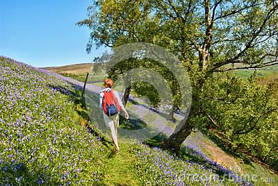 Hiker walking through bluebells