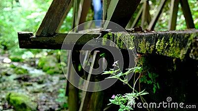 Hikers на деревянном мосте сток-видео