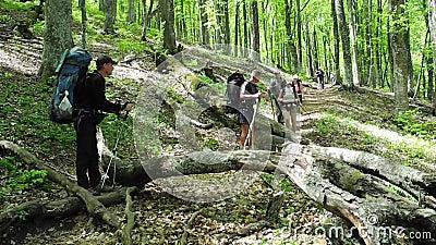 Hikers собирают trekking в Крыме видеоматериал
