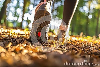Hiking принципиальная схема