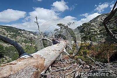 Hiking at Corsica